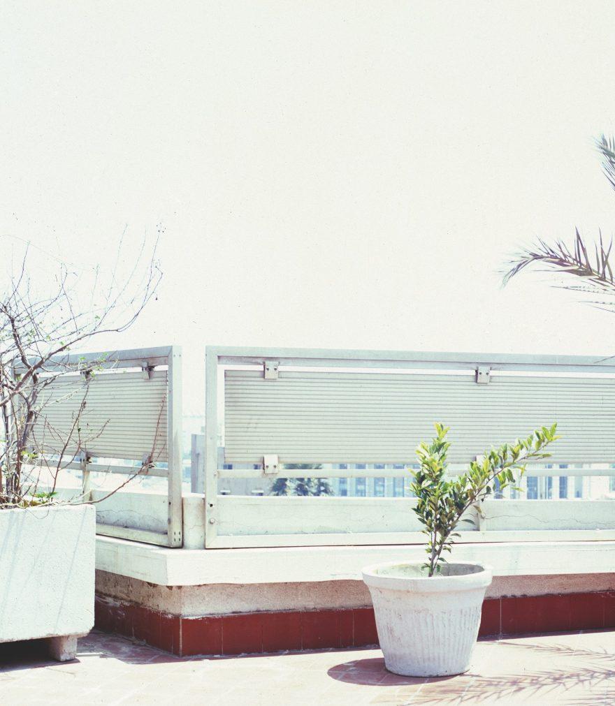 AGBS Mimi Cherono Ng'ok_dakar plant catalog